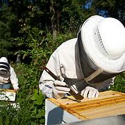 2016-08-15 Honey Bee Research