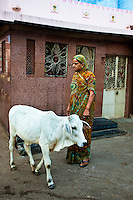 Woman standing in the street next to a building as a calf walks by, India. Exotic places fine art photography prints, stock images.