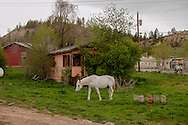 Northern Cheyenne Indian Reservation, Lame Deer, Montana, horses graze