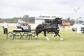 Class 23 - Welsh Cob D