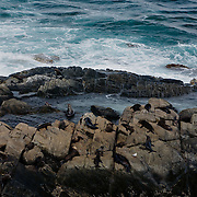 Sea Lions colony under Admiral's Arch in Flinders Chase, Kangaroo Island.
