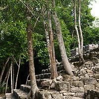 Trees at the Mayan ruins at Coba.