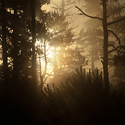 Sunrise in pine-oak forest at the Neovolcanic Axis.Las Palomas. Morelos State. MEXICO