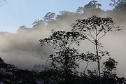 Canaa dos Carajas_PA, Brasil.<br /> <br /> Floresta Nacional de Carajas (Flona) em Canaa dos Carajas, Para.<br /> <br /> The Carajas National Forest in Canaa dos Carajas, Para.<br /> <br /> Foto JOAO MARCOS ROSA / NITRO