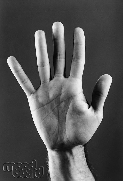 Palm of hand (b&w) (close-up)
