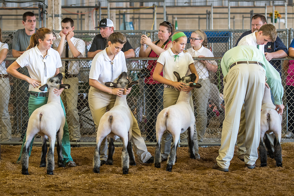 Timonium, Maryland - young farmers showing their sheep at the 2016 Maryland State Fair.