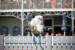 Plate Ulf (GER) - Crazy Fly<br /> Derby of Hamburg 2010<br /> © Dirk Caremans