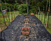 Just replanted tomato seedlings in between my new wildflower meadows. Image taken with a Leica T camera and 11-23 mm lens (ISO 100, 15 mm, f/5.6, 1/320 sec).