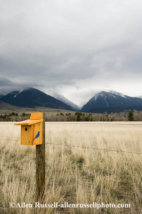 Mountain Bluebird house in Paradise Valley, Absaroka Mountains and Wilderness Area south of Livingston, Montana