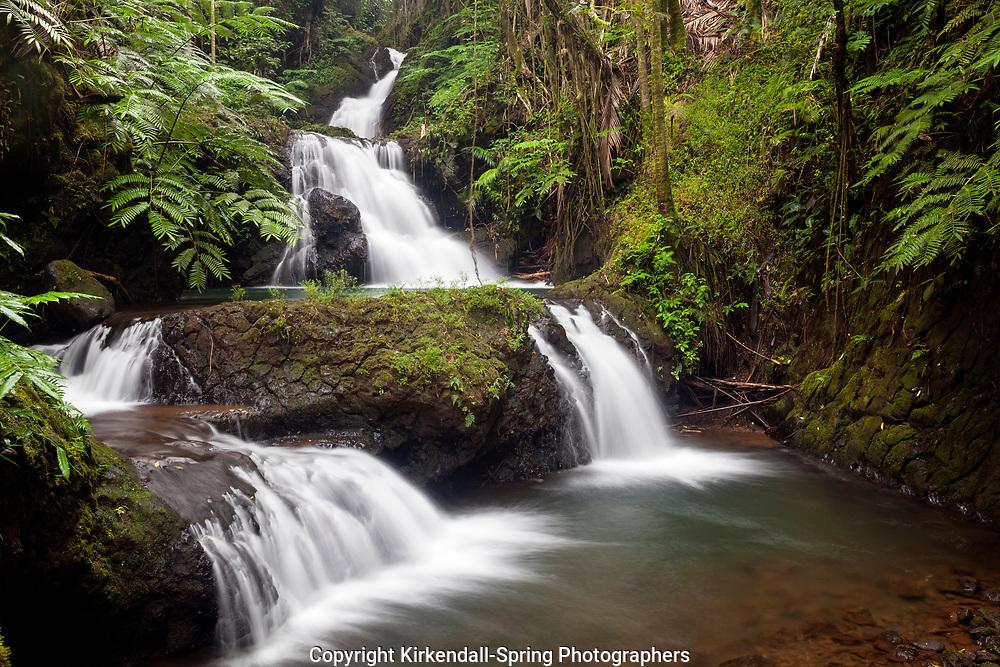 HI00325-00...HAWAI'I - Waterfall in the Hawaii Tropical Botanical Garden near Hilo on the Island of Hawai'i.
