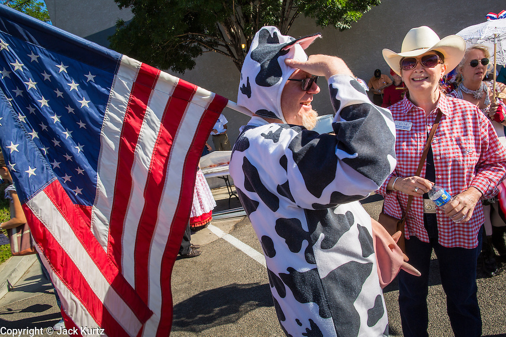 30 JUNE 2012 - PRESCOTT, AZ:  A man in a cow suit and carrying an American flag, marches in the Prescott 4th of July Parade. The Prescott Frontier Days Rodeo Parade is marking its 125th year. It is one of the largest 4th of July Parades in Arizona. Prescott, about 100 miles north of Phoenix, was the first territorial capital of Arizona.        PHOTO BY JACK KURTZ