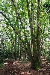 Bos van Sprenger, Nieuw Loosdrecht, Wijdemeren, Netherlands