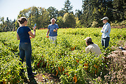 Frank Morton discusses his line of peppers with Claire Luby, Alex Wenger, and Julie Dawson at his Wild Garden Seed Farm in Philomath, OR.
