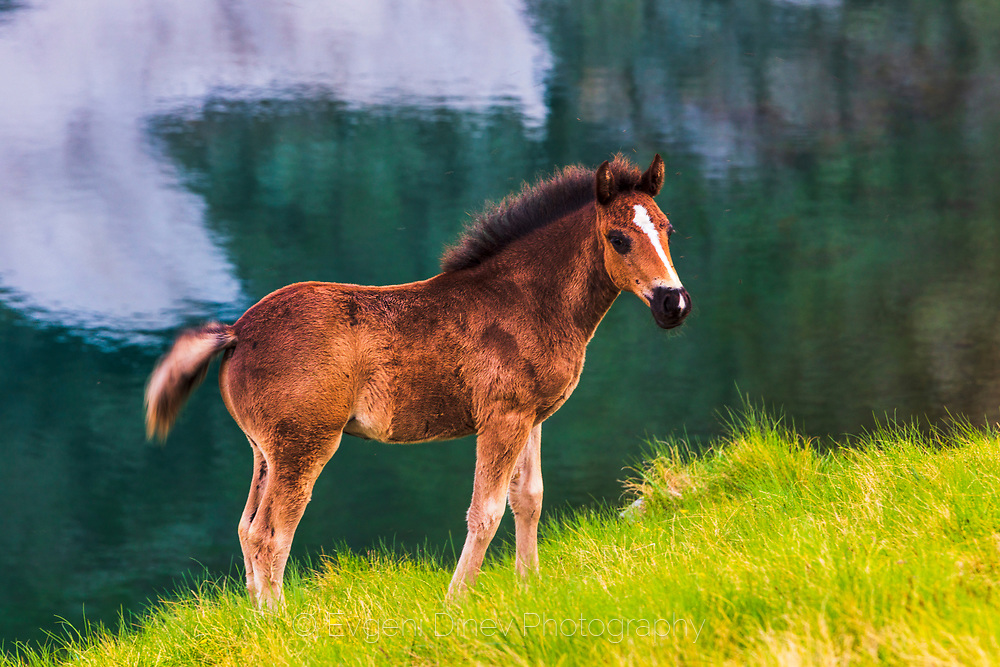 Young horse by the lake