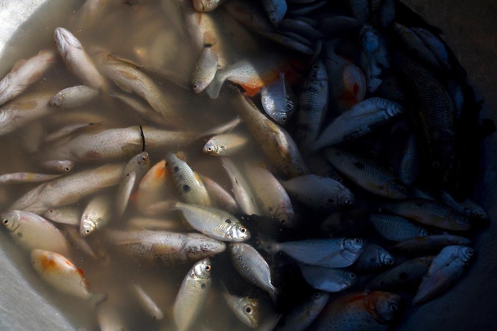 Codo_MA, Brasil...Comunidade Santo Antonio dos Pretos, remanescente de Quilombola. Na foto pesca...Santo Antonio dos Pretos community, quilombo remnant community. In this photo fishes...Foto: LEO DRUMOND /  NITRO