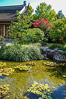 Japanese Garden, Portland, Oregon, USA, water feature, pagoda, flowers, shrubs, pond, 200809040939.<br />