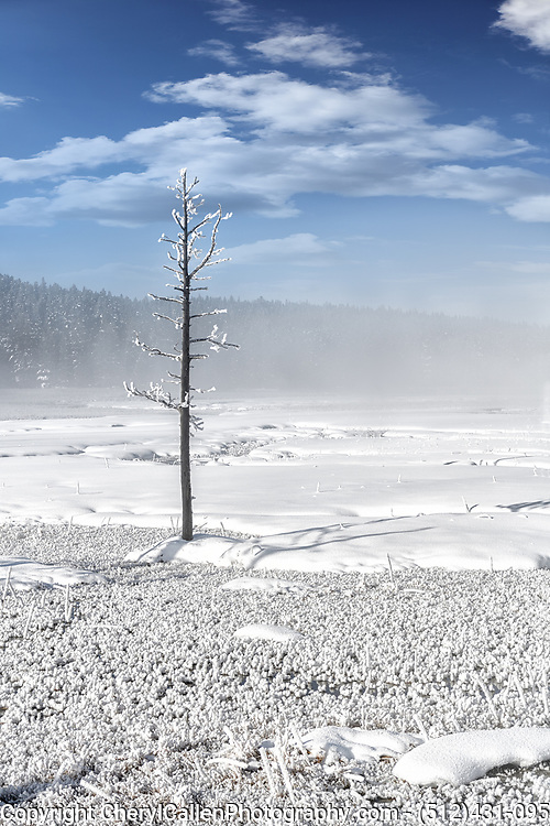 hoarfrost in Yellowstone National Park