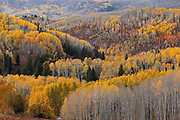 Beautiful autumn colors of the Routt National Forest near Steamboat Springs.