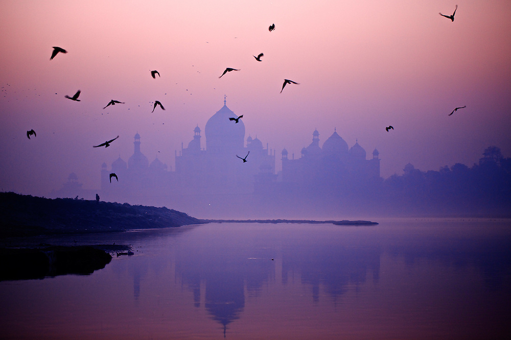 The Taj Mahal with a flock of black birds taking flight over the river Yamuna, India