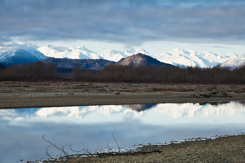 Eagles (Haliaeetus leucocephalus) dot the Chilkat River bed in the Chilkat Bald Eagle Preserve as the sun illuminates the Chilkat Mountains reflecting in the river near Haines in Southeast Alaska. Morning. Winter.
