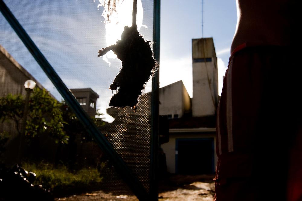 Ouro Preto _ MG, 16 Janeiro de 2008..FOLHA SAO PAULO.ESPECIAL - CRISE CARCERARIA EM MINAS..Carceragem municipal de Ouro Preto. Apesar do estado ja citar que a cadeia ja esta em obras, ainda apresenta muitos problemas...Grandes falhas de seguranca: Somente dois os policiais cuidam da cadeia, um civil (turno de 24 horas) e um militar (turno de 8 horas). SuperlotaÌão 170 presos, cuja capacidade sao 80...Na imagem, um preso segura um dos ratos que sao achados frequentemente no interior da cadeia...FOTO: BRUNO MAGALHAES / AGENCIA NITRO / FOLHA IMAGEM