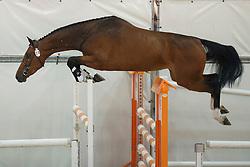 074, Hufonia<br /> Vrijspringen Nationale Merriekeuring, 3 jarige springmerries <br /> KWPN Paardendagen Ermelo 2015<br /> © Hippo Foto - Dirk Caremans