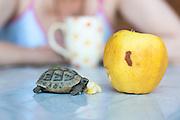 Breakfast...***Agreed Fee's Apply To All Image Use***.Marco Secchi /Xianpix. tel +44 (0) 207 1939846. e-mail ms@msecchi.com .www.marcosecchi.com
