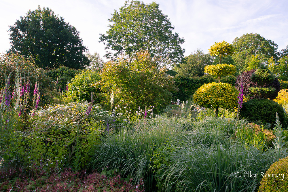 Topiary, Digitalis and grasses in the Serpentine Walk area at the Laskett Gardens, Much Birch, Herefordshire, UK