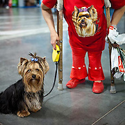 A Woman with crutches is getting a portrait with her Yorkshire Terrier at a dog exhibition in Prague. #prag #praha #prague #czechrepublic #dog #exhibition #dogshow #hund #portrait #hundeschau #tschechien #animal