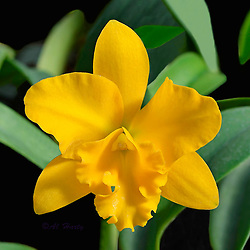 Orchids is a collection of Al Harty's beautiful Orchid flowers, with origins from around the world, that grow on Maui, Hawaii.