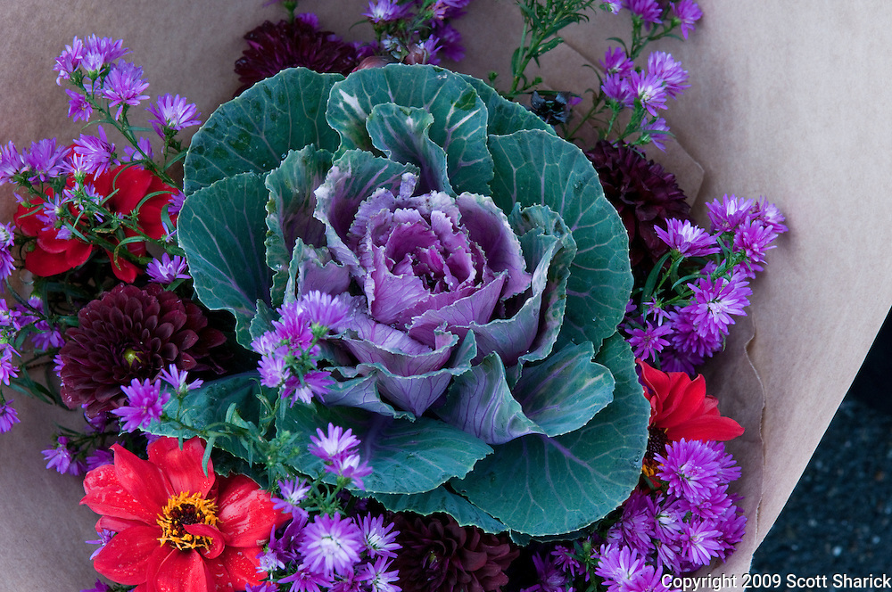 Ornamental cabbage and flowers sold at a Farmers Market in Seattle, Washington. Missoula Photographer