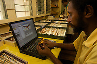 Research staff members (parataxonomists) working with collections of moths (lepidoptera) collected from the rain forests of Papua New Guinea.  This lab is the headquarters of the New Guinea Binatang Research Project in Medang.