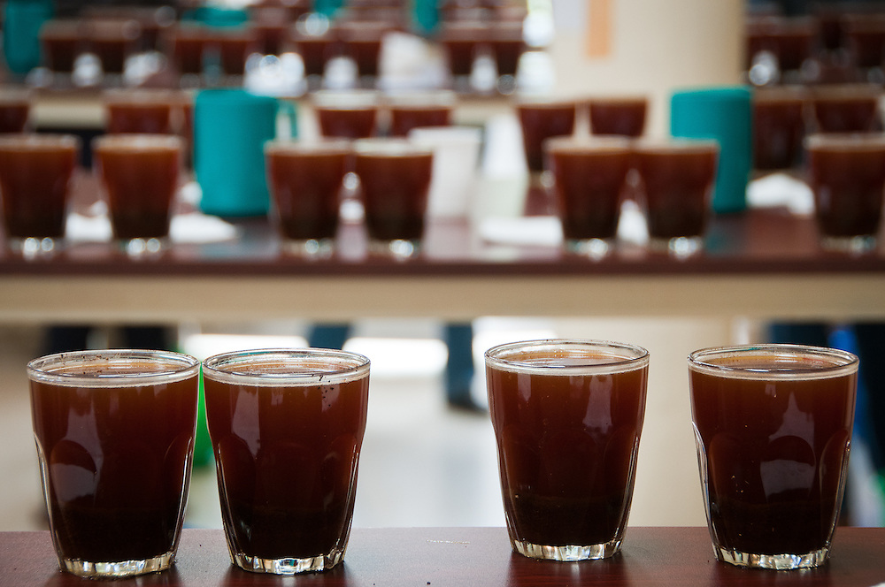 Out of 171 coffees, 105 passed the pre-trials for the Rwandan Cup of Excellence. Kayonza, Rwanda.