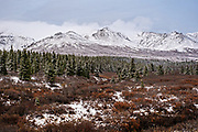 An early season snow dusts the boreal forests and Alaskan Range of mountains in Denali National Park, McKinley Park, Alaska