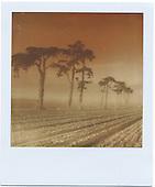 Polaroid: The Coast