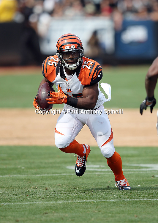 Cincinnati Bengals running back Giovani Bernard (25) looks for running room after catching a second quarter swing pass during the 2015 NFL week 1 regular season football game against the Oakland Raiders on Sunday, Sept. 13, 2015 in Oakland, Calif. The Bengals won the game 33-13. (©Paul Anthony Spinelli)