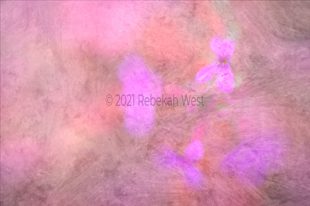 abstract painting in horizontal field, could be rotated, red violet butterfly shaped flower upper right corner, three other blurry flower forms in semi-circle below single flower, mauves, rose, flower art, feminine, high resolution, licensing, iridescent, 5616 x 3744