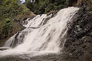 El Parque Nacional Chagres se encuentra entre las provincias de Panamá y Colón, en la República de Panamá. Está situado en el sector oriental del Canal de Panamá, y su superficie total es de 129.000 hectáreas.1<br /> <br /> El parque está formado por bosques tropicales y una serie de ríos que suministran el agua suficiente para el río Chagres y el lago Gatún, que regulan el funcionamiento del Canal de Panamá.<br /> <br /> En el hábitat del parque se pueden encontrar todo tipo de aves, entre las que destaca el piculus callopterus o carpintero panameño, una especie única en Panamá, además de algunos ejemplares de águila arpía.<br /> <br /> Entre los mamíferos destacan el venado cola blanca, el mono araña de manos negras y algunas especies de bolitoglossa. En sus densos bosques también habitan tapires, jaguares y otros grandes felinos.<br /> <br /> En el Chagres y otros ríos de la zona habitan 59 especies de peces de agua dulce, además de gatos de agua, junto con caimanes de anteojos y cocodrilos.<br /> <br /> ©Alejandro Balaguer/Fundación Albatros Media.