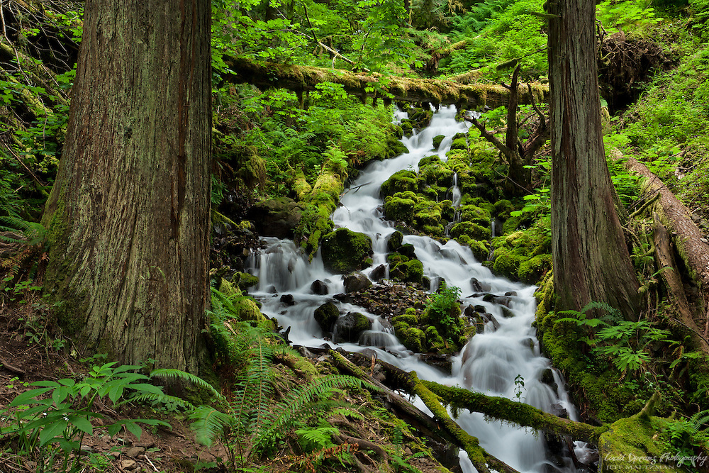 A mountain stream gently cascades down the hillside in the Columbia River Gorge.