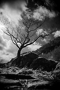 A dark tree against a dark, cloudy sky in the Lake District, England<br />
