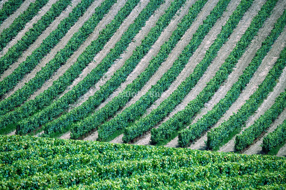 vineyard in France the Languedoc during summer season