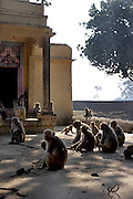 On the road to Ghazipur district monkeys sit by a temple.