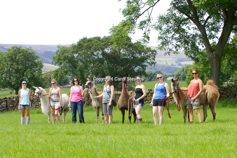 Part of Meg's Hen Party celebrations - a morning trek with Nidderdale Llamas, with Suzanne and Mary.  Fabulous time had by all!