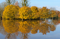 © Licensed to London News Pictures. 16/11/2019. Upton upon Severn, Worcestershire, UK. The rugby pitches get flooded at Upton upon Severn in Worcestershire, UK. After several days of heavy rainfall, there is severe flooding in many parts of  Worcestershire, UK. Photo credit: Graham M. Lawrence/LNP
