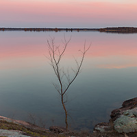 http://Duncan.co/small-tree-on-shoreline-at-dusk