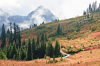 Golden Gate trail above Edith Creek at Paradise Meadows with the Tatoosh Range in the background, Mount Rainier NP, WA, USA