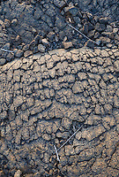 Close-up of a very old lava flow in Hawai'i Volcanoes Nattional Park