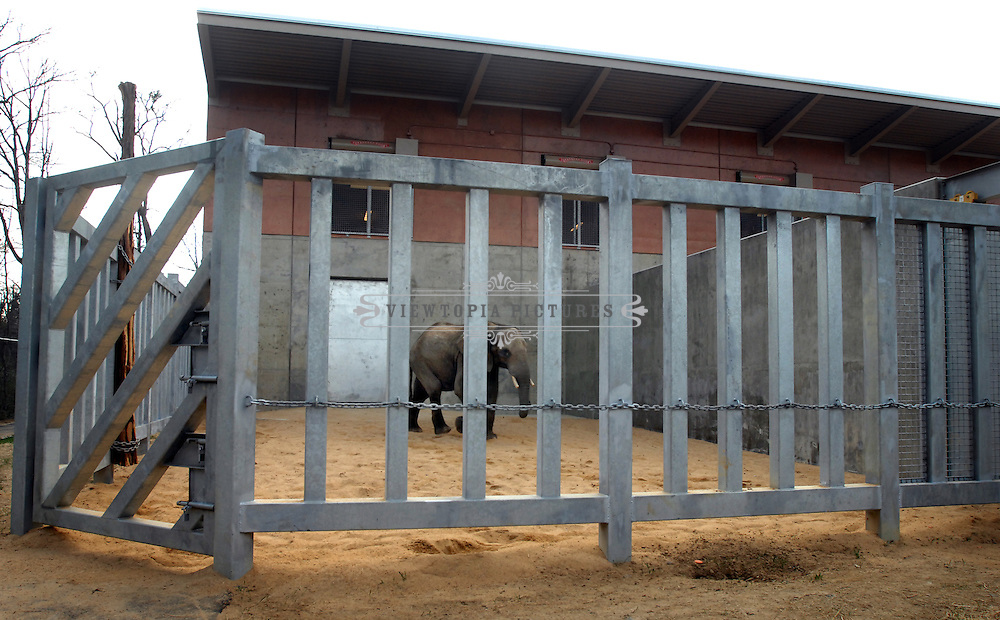 Callee, a 10-year old African bull elephant, explores his surroundings while in quarantine in a holding pen at The Birmingham Zoo on his first day in Birmingham Sunday, February 19, 2011 after travelling from Pittsburgh..  (Christine Prichard - Special to the Birmingham News).Callee, a 10-year old elephant, is in quarantine in a holding pen at The Birmingham Zoo on his first day in Birmingham Sunday, February 19, 2011.  (Christine Prichard - Special to the Birmingham News).