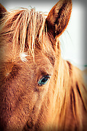 Close-up of Brown Horse, Alberta Canada