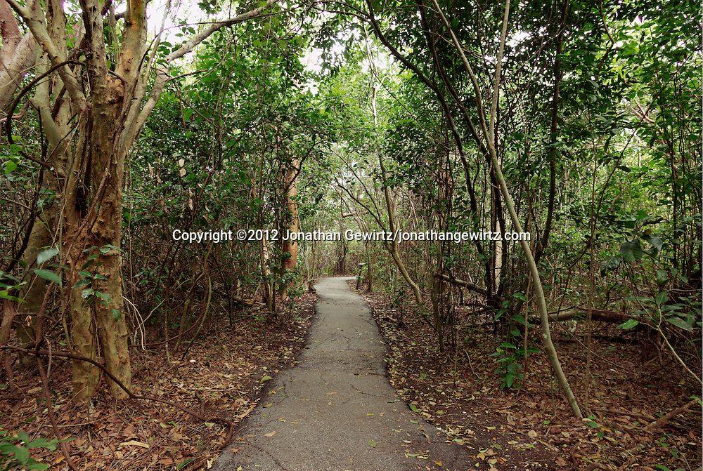 The Gumbo Limbo trail through tropical forest in Everglades National Park, Florida. WATERMARKS WILL NOT APPEAR ON PRINTS OR LICENSED IMAGES.